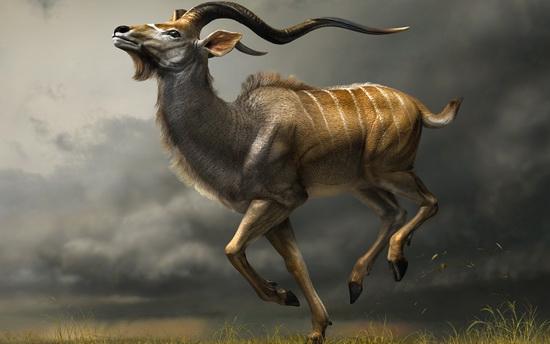 Charging Kudu
