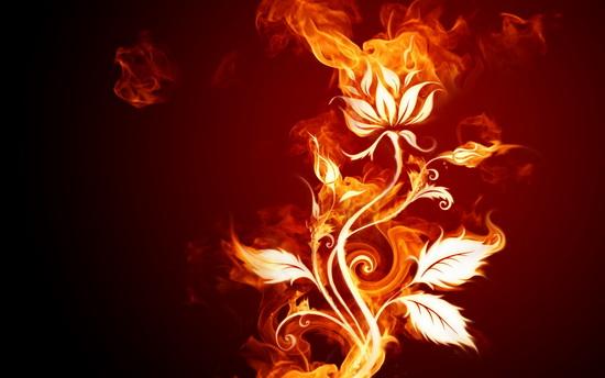 Fire flower wallpapers